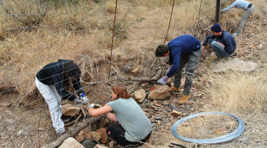 Projects Abroad conservation volunteers in Botswana remove poaching snares.